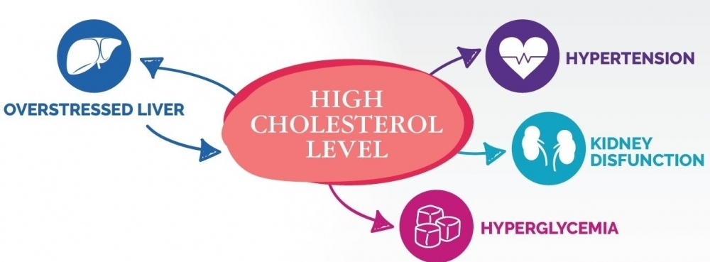 What happens when cholesterol is higher than normal? - Omeolipid