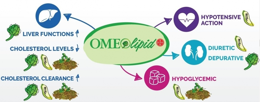 What is Omeolipid and how it acts? - Omeolipid